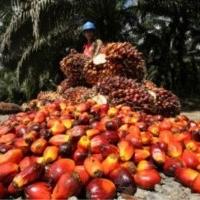 Öl für Kochen, Bio-Diesel und Seifenherstellung